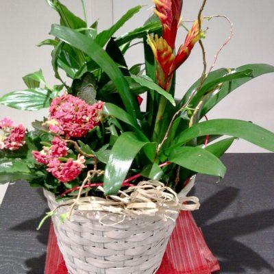 floristeria_denis_cestas_de_plantas_variadas_2