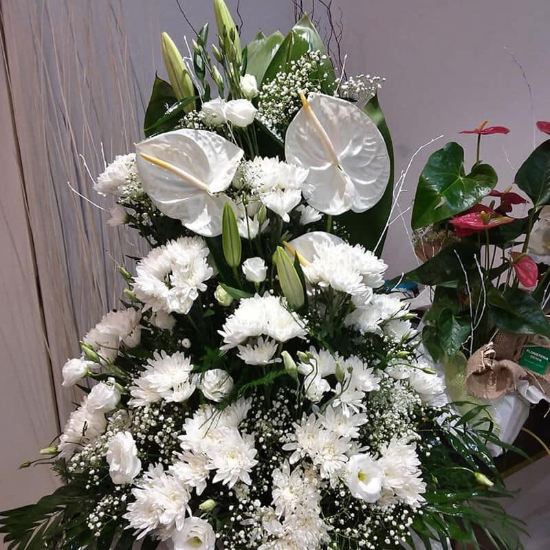 centro-flor-pureza
